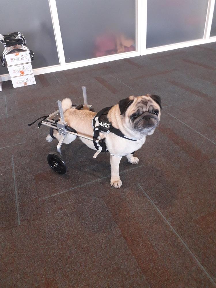 Honden rolstoel