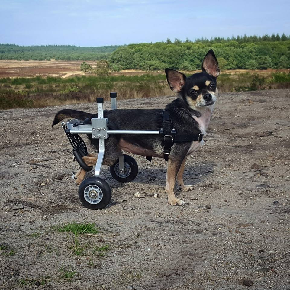 honden rolstoel Luna