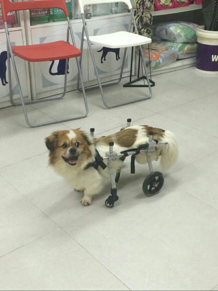 rolstoelen hond