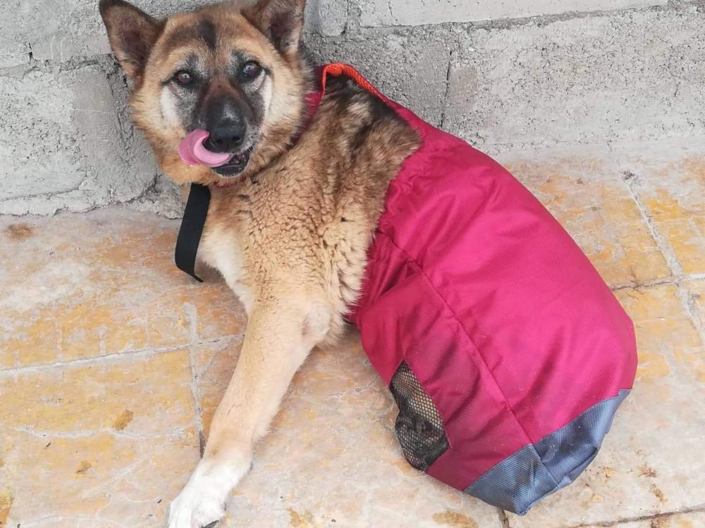 Honden dragbag