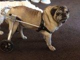 Honden rolstoel Luca S 03_