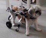 Honden rolstoel Luca XS 03_