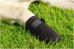 Beschermingsschoen voor honden maat XL