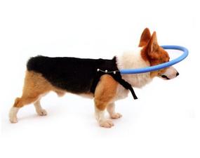 Anti stoot ring M (voor blinde of slechtziende honden)